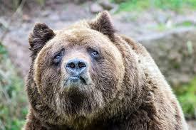 error_bear.jpg